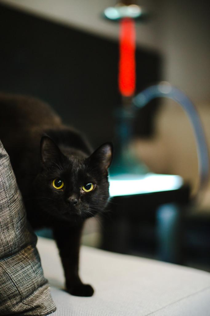Кот по имени Безупречный в кальянной Дуит
